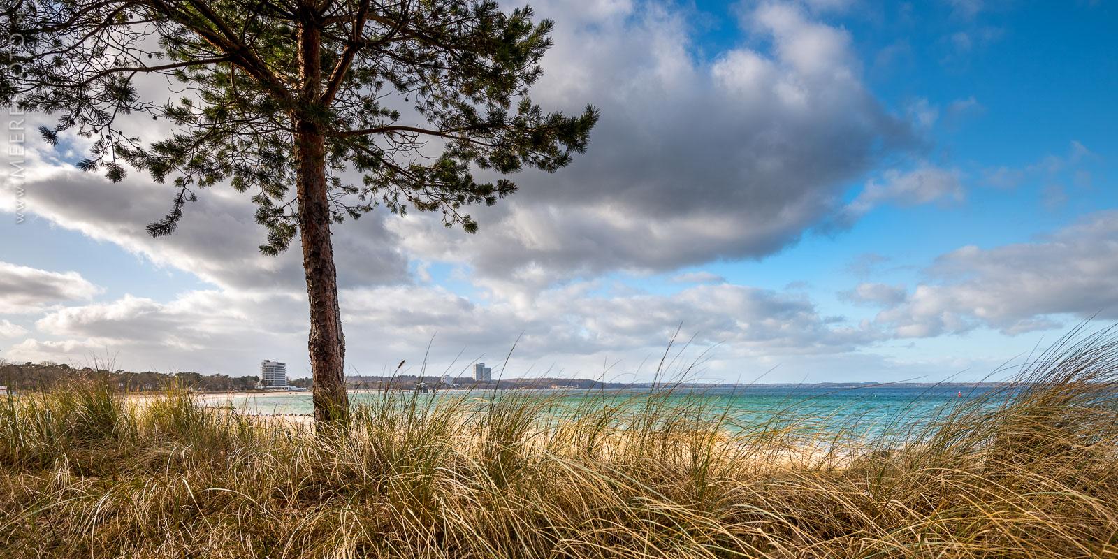 Dünen, Kiefer, Wind am Timmendorfer Strand